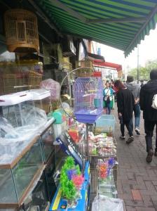 Dongdaemun Pet Alley