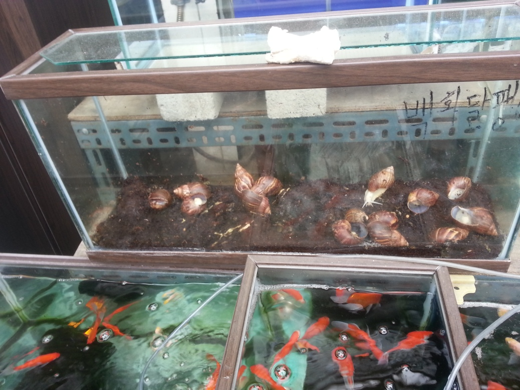 Snails and Fish at Pet Alley, Seoul