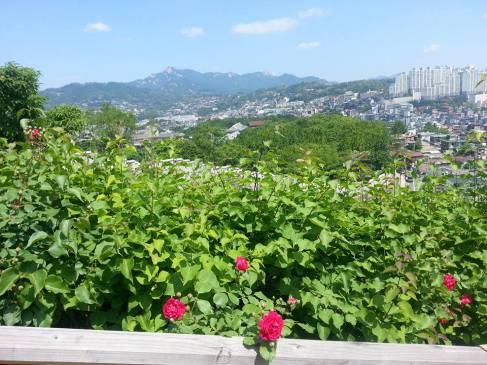 Beautiful gardens surround Seoul City Wall